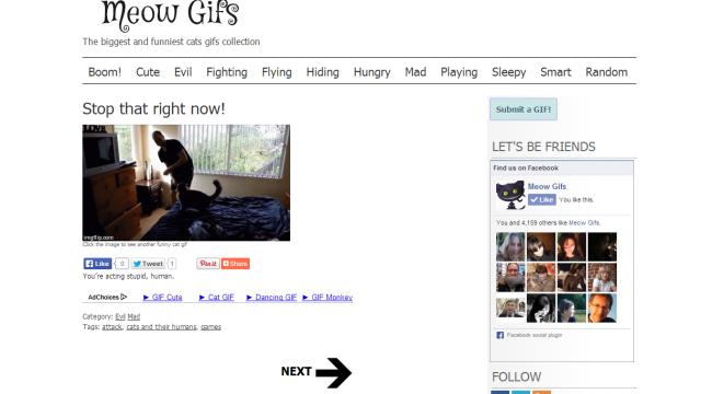 MeowGifs - развлекательный сайт